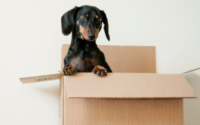 Maintaining the Positive Habits of Moving