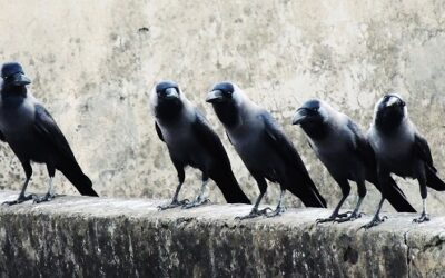 Threats to Success: On Competition, Cannibals, and Crows